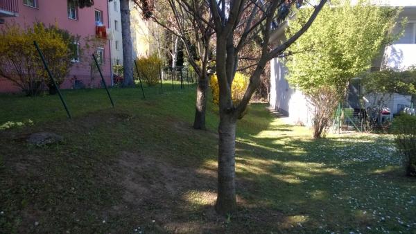 Wald (13)